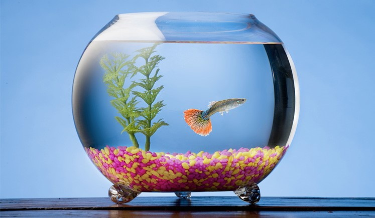 GA Pet Sitters - Fish And Everything Related
